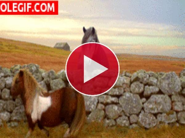 GIF: Poni dando marcha atrás