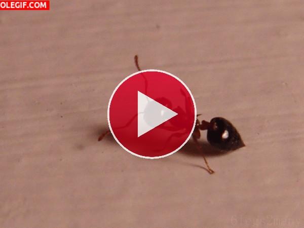 GIF: Mira cómo baila la hormiga