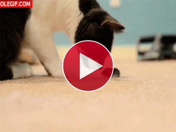 GIF: Gato y ratoncito