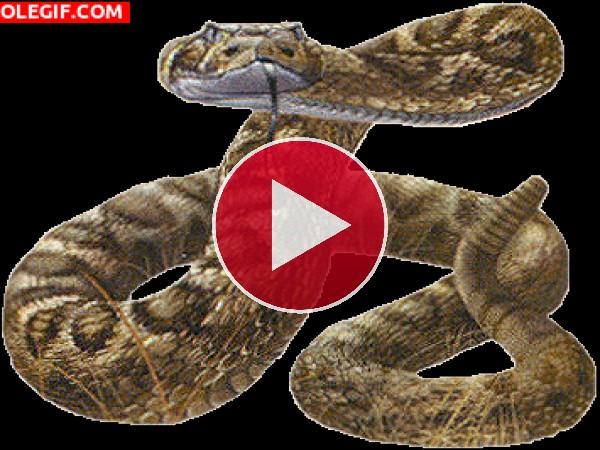 GIF: Serpiente de cascabel