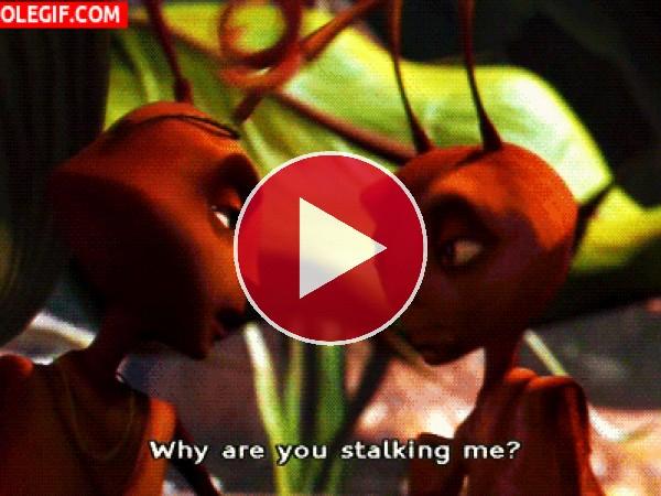 GIF: ¿Por qué me estás acechando?