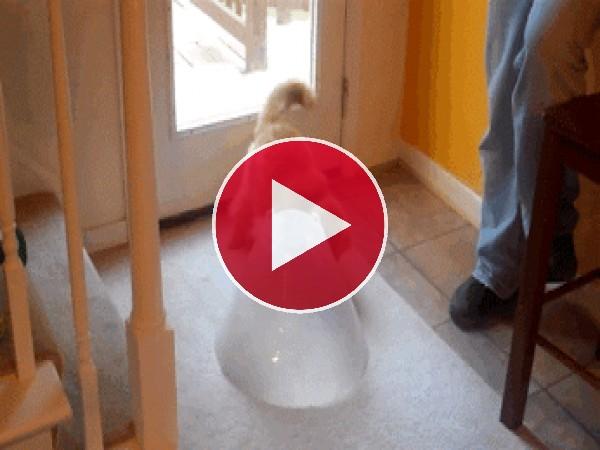 GIF: La casa del gato