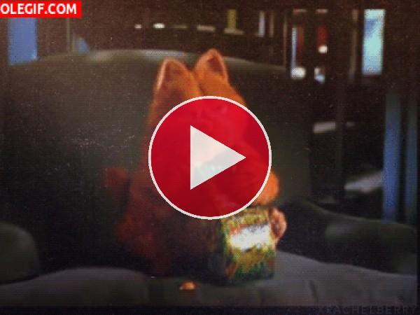 GIF: Garfield engullendo